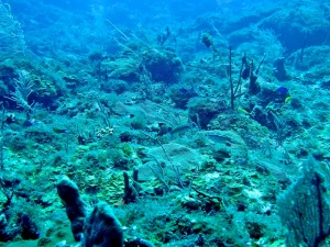 Reef with only a few patches of live coral, empty of fish and a lot of algae growth