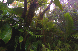 Saba's Cloud Forest - photo from Kai Wulf