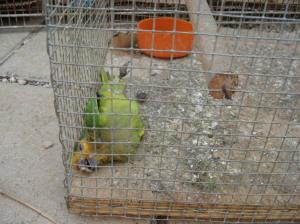 One young parrot could not survive the conditions