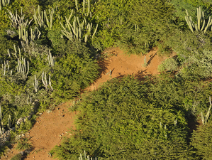 Areal view of dry forest landscape with cacti. Photo from: Christian König, SHAPE/DCNA