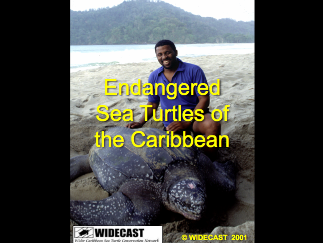 Screen Shot WIDECAST_2001_Endangered_Sea_Turtle_of_the_Caribbean 2012-10-05 at 2.06.55 PM