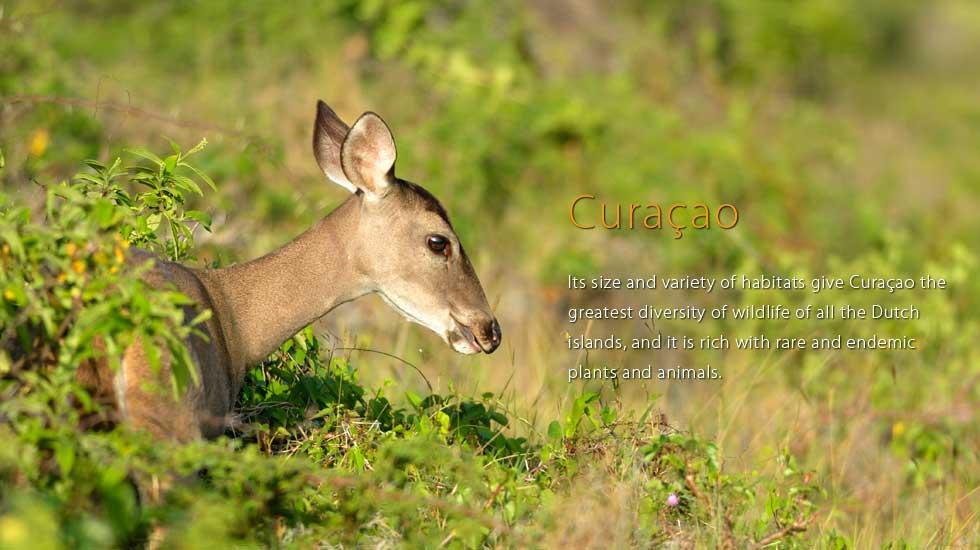 curacao_header