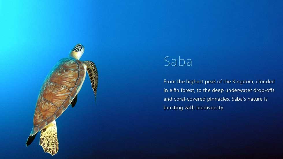 saba_header