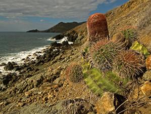 Photo Credit: © 2012Henkjan Kievit — SHAPE/DCNA. The Pope's Head Cactus on the coast of St. Maarten