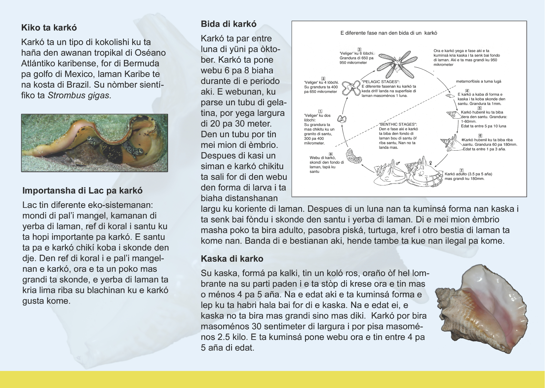 Conch Restoration Project Info Brochure - Back