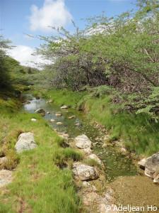 P-vandepolli-habitat