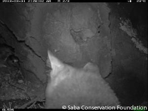 cat-camera-trap