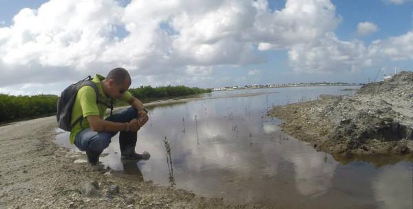 Simpson bay mangroves 1