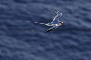 SABA_Birds_14-M